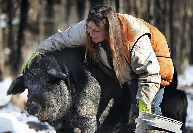Susan Frank pets one of her mulefoot pigs at Dogpatch Farm.