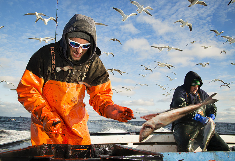 Maine man tackles commercial fishing – without a net