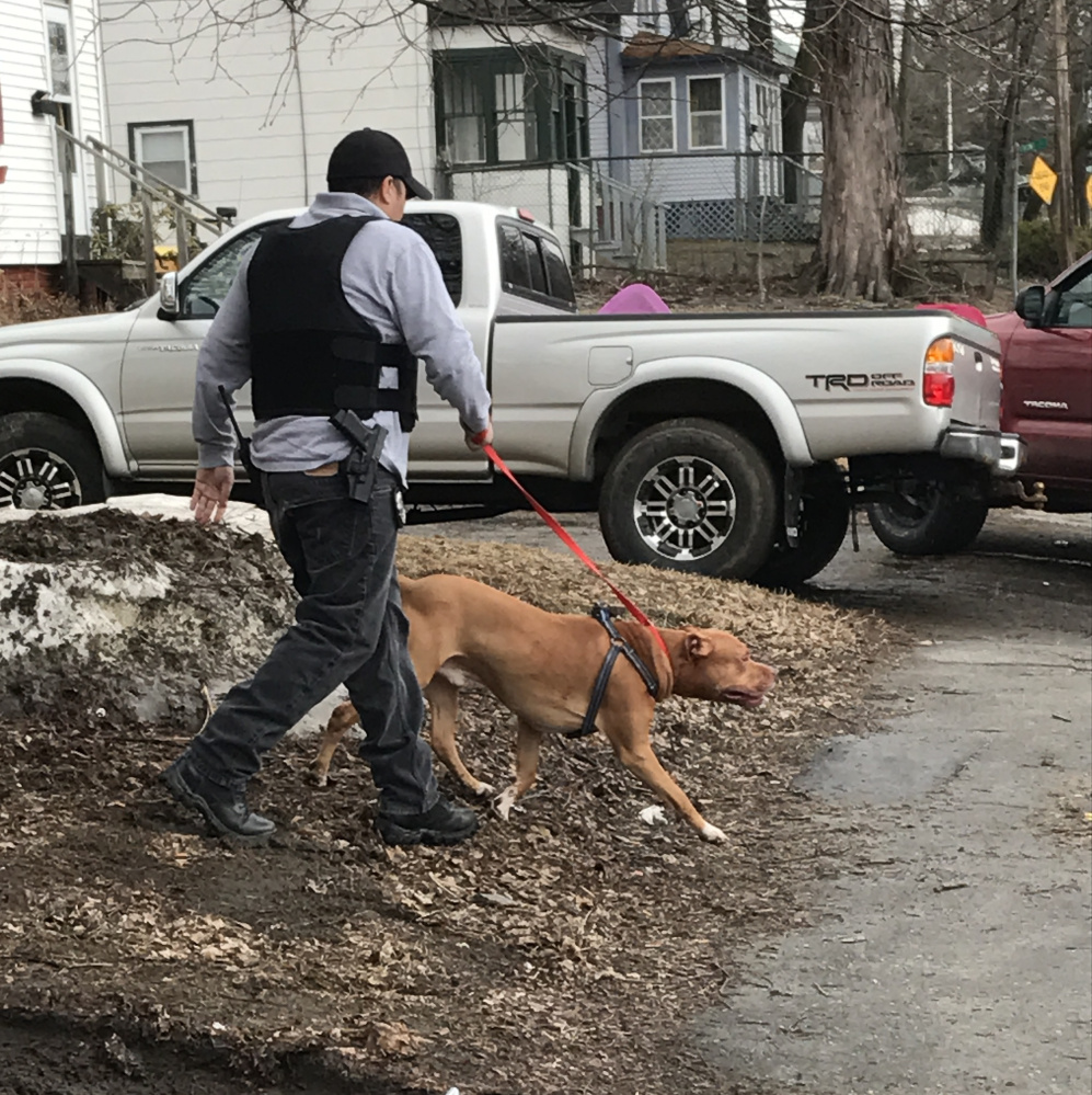 A police officer removes a dog from a residence on Front Street in Waterville on Friday after the dog reportedly attacked its owner, who was sent to the hospital.