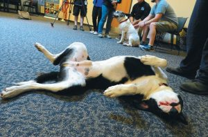 JAKE LAYS on his back hoping for a belly rub as he and Melvin, in the background, get ready to show the skills they learned in a dog training program at Two Bridges Regional Jail. Below, inmate Norman Palmer smiles down at Melvin.