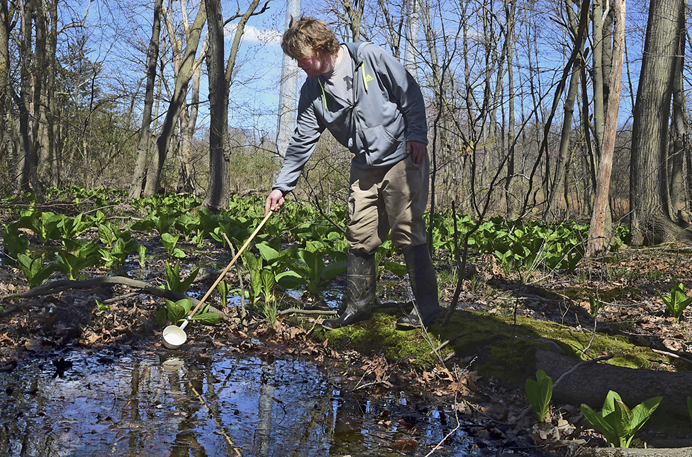 An employee of All Habitat Services LLC of Branford, Conn., scoops water from a swamp in Milford, Conn., on April 17. The Northeast Regional Climate Center at Cornell University reports that it was the fourth-wettest spring on record from West Virginia to Maine, raising concerns about a corresponding spike in mosquito-borne illnesses.