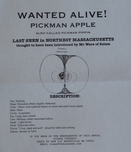 "John Bunker's ""wanted"" poster for the elusive Pickman apple."