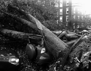 A LARGE TREE is down on top of a car on Mellen Street in Portland on Monday, after early morning storm with high winds. Central Maine Power, the state's largest utility, said its 391,000 outages surpasses its peak of 345,000 homes and businesses without power during the ice storm of 1998.