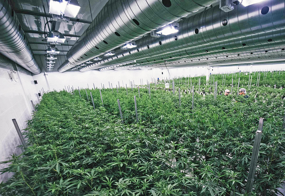 Florida company seeks federal permit to grow research cannabis in
