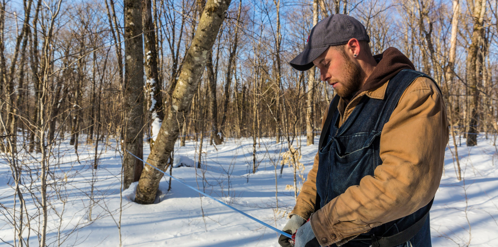 Jean Francois Faucher repairs a sapline in the Big Six Forest sugarbush in 2015. Selling the development rights to the maple sugar forest would have been a big payday for the land's owner, a LePage campaign donor.