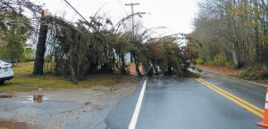 A TREE HANGS on power lines along Bay Road in Bowdoinham on Monday.