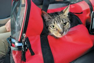 OSCAR THE CAT pokes his head out from his pet carrier travel bag on his way to John F. Kennedy International Airport in New York. Oscar is a cat of the world with remote-controlled toys and his own Instagram account, but there's one thing about modern life he doesn't like: flying.