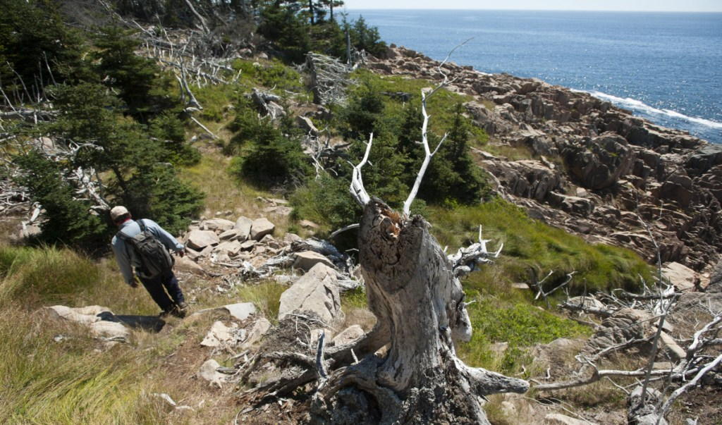 Property taxes have gone up throughout Maine in recent years, even as the amount of tax-exempt property – like this section of trail on the Maine Coast Heritage Trust's Frenchboro Preserve – has stayed the same.