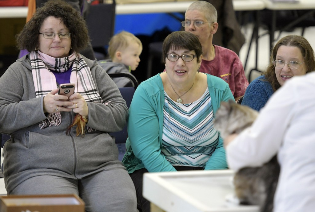 Contestants watch a cat get judged Sunday during the show in Augusta.