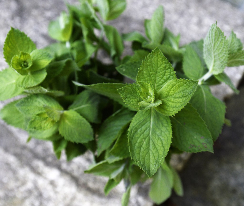 Mint in the garden can be aggressive, spreading quickly and overtaking space for other plants.