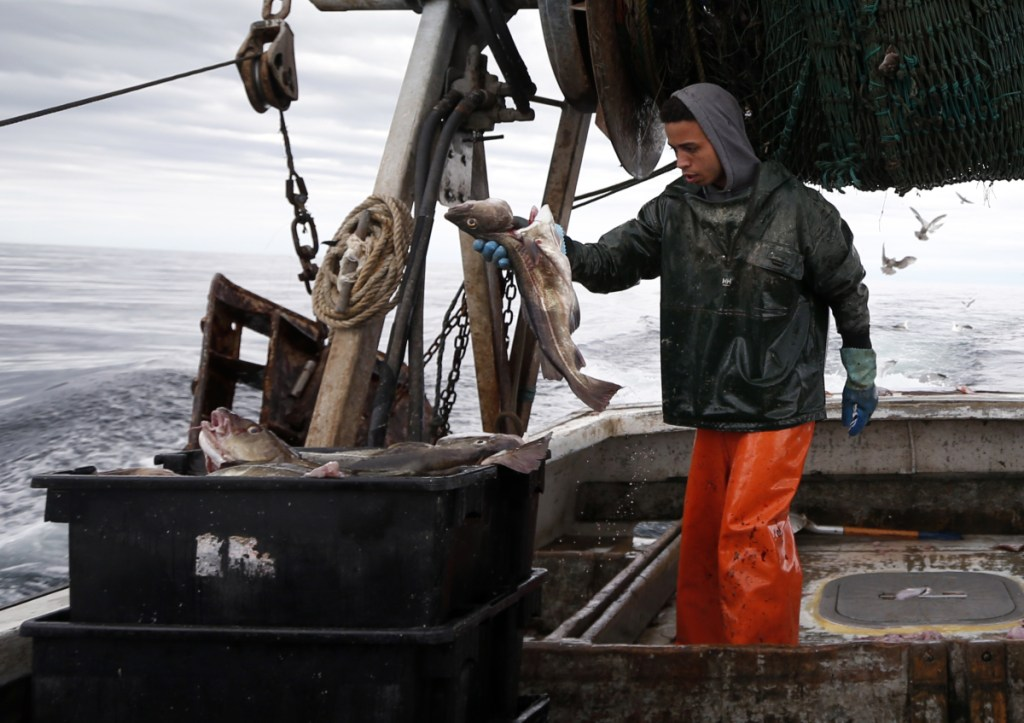 Elijah Voge-Meyers fills a crate with cod on a trawler off the coast of Hampton Beach, N.H. in 2016.