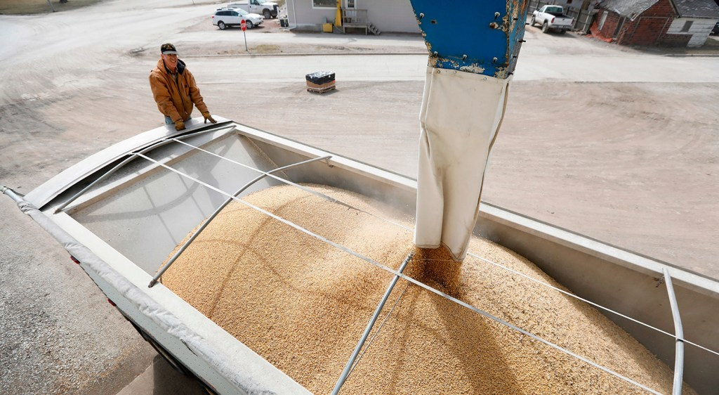 Terry Morrison, of Earlham, Iowa, watches as soybeans are loaded into his trailer at the Heartland Co-op., in Redfield, Iowa. Soybeans are the largest agricultural export in the U.S., and face a new tariff.