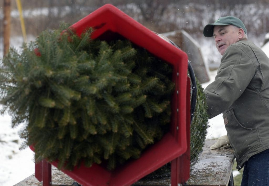 Robert Palmer wraps a freshly cut fir tree Sunday at Ben and Molly's Christmas Tree Farm, a business he operates with his wife, Donna L. Palmer, in China.