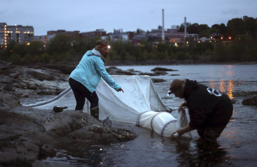 Elver fishermen set up a net on the Penobscot River in Brewer in May 2017. The state's lucrative baby eel industry will likely face tighter controls this year designed to thwart poaching.