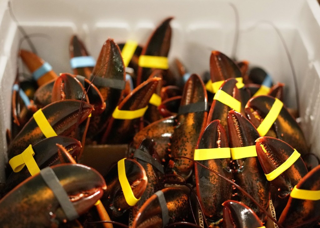 Lobsters are packed vertically in a special box at Maine Coast in York before being shipped to Hong Kong in January for Chinese New Year celebrations.