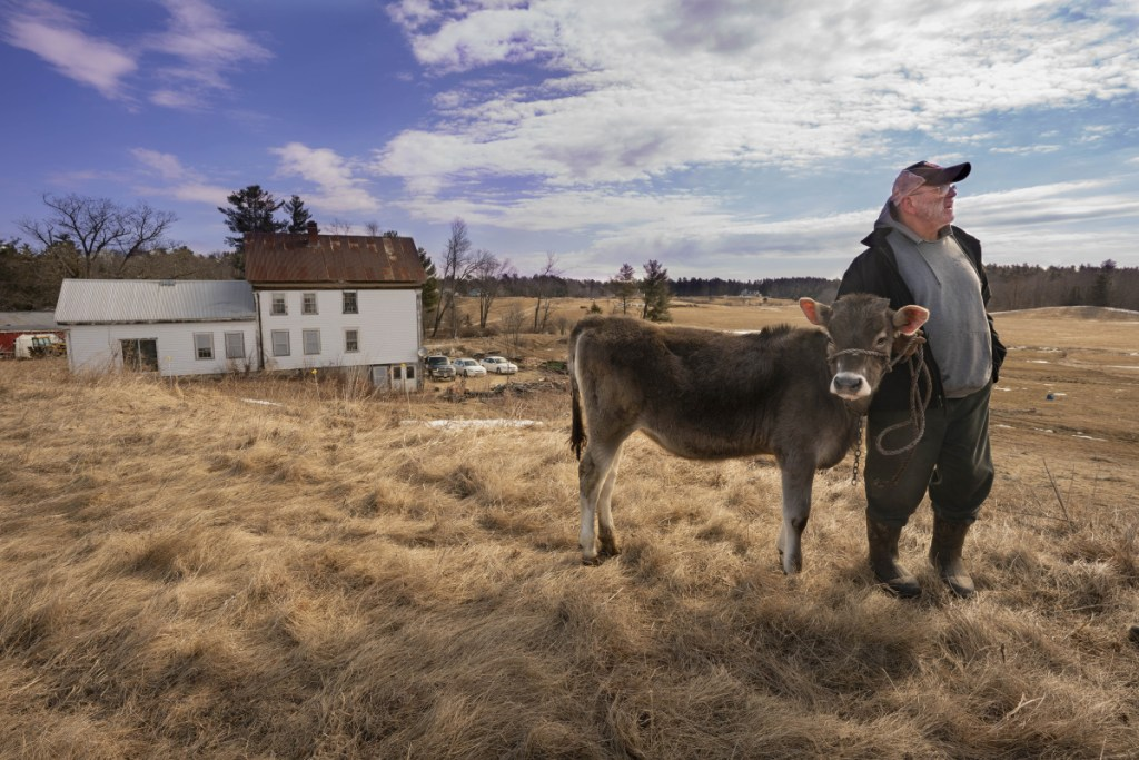 Fred Stone holds Lida Rose, one of his brown Swiss cows, on his Arundel dairy farm before a news conference Tuesday that was held to raise awareness about PFAS chemical contamination in his fields and cows resulting from municipal sludge he had spread from 1983 to 2004. Lingering contamination in his herd is forcing him to dump the milk his cows produce.