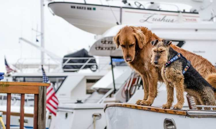 Dog Boating Safety Multihulls Magazine