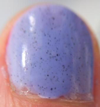 Pahlish Balloon flower close-up
