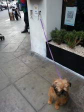 How cute was this dog parked outside the bakery?