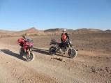Ducs in desert