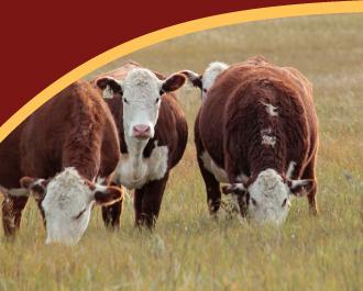 FAQ-cattle