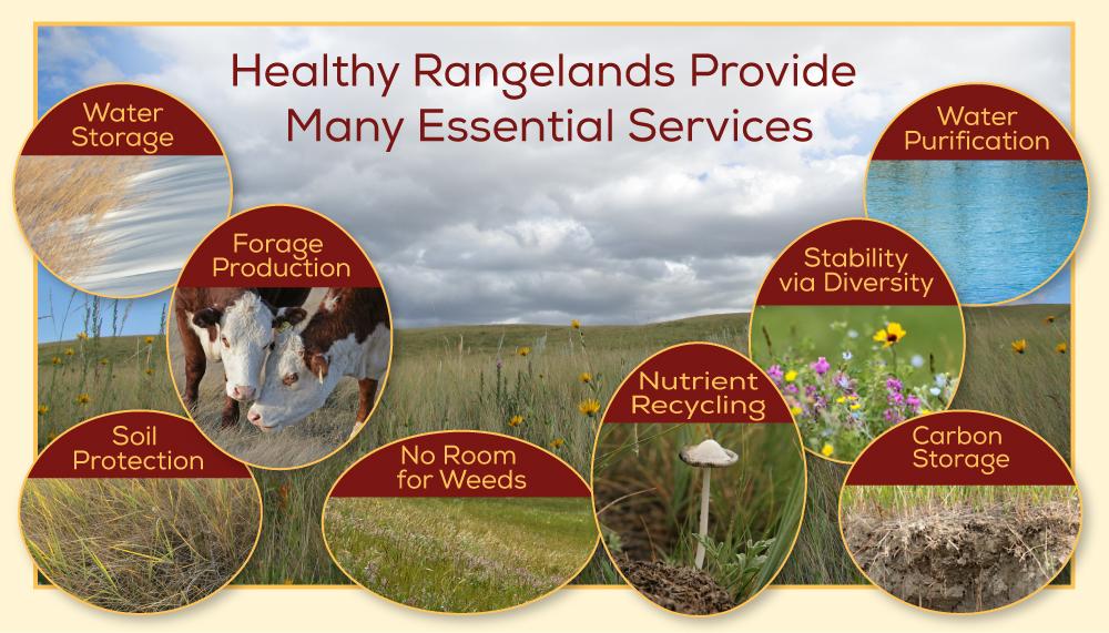 rangeland-services-DIAGRAM