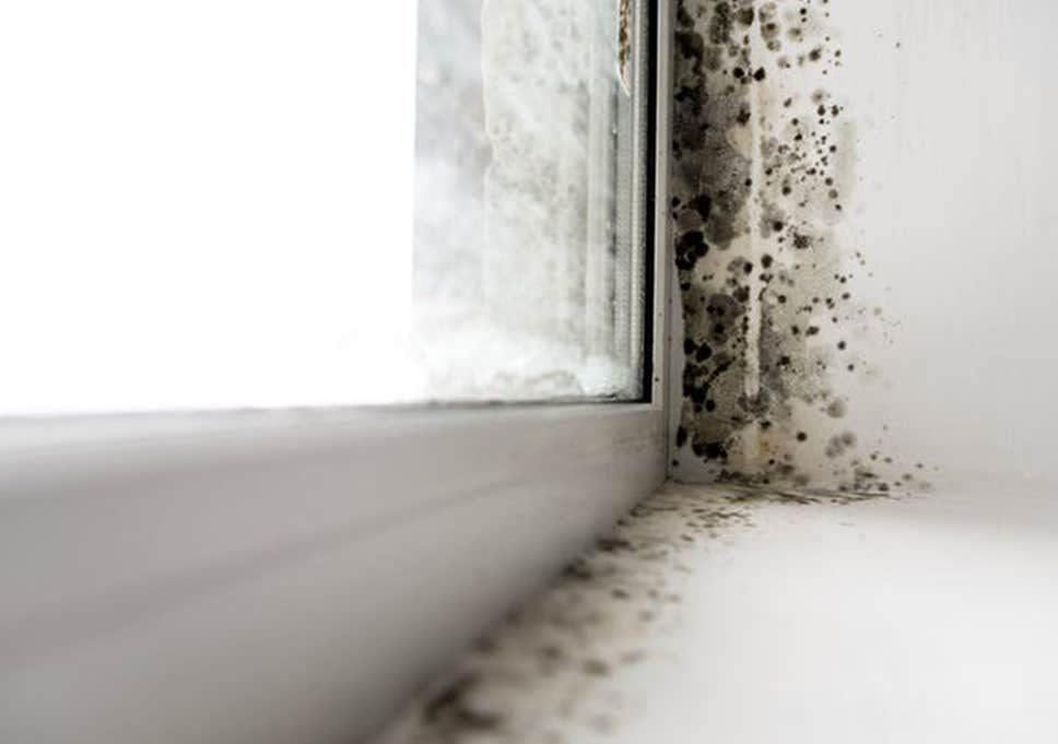 mould and damp in rented properties