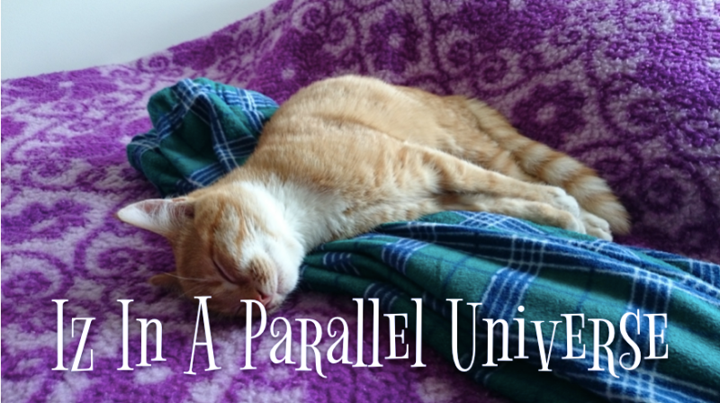Cat login asleep with the caption 'Iz in a parallel universe'