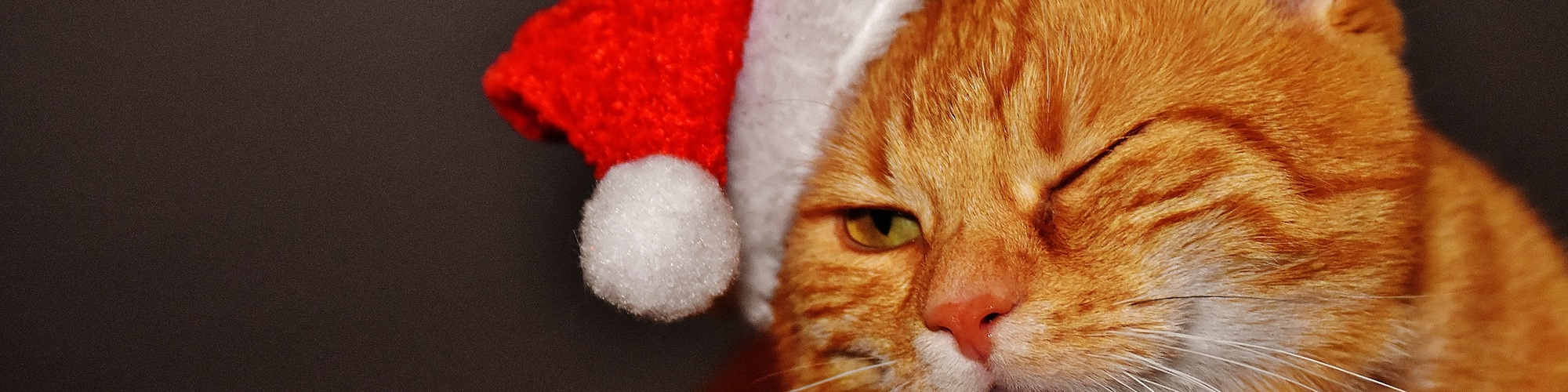 A ginger cat wearing a santa hat