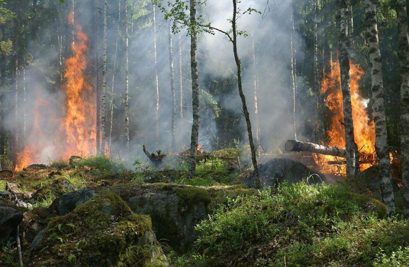 Cómo conducir en un incendio forestal
