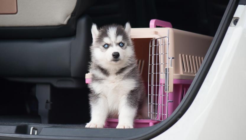 Cómo transportar mascotas en nuestro vehículo