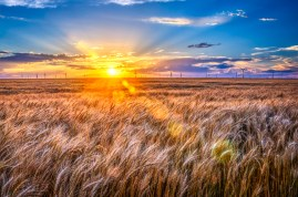For Amber Waves of Grain