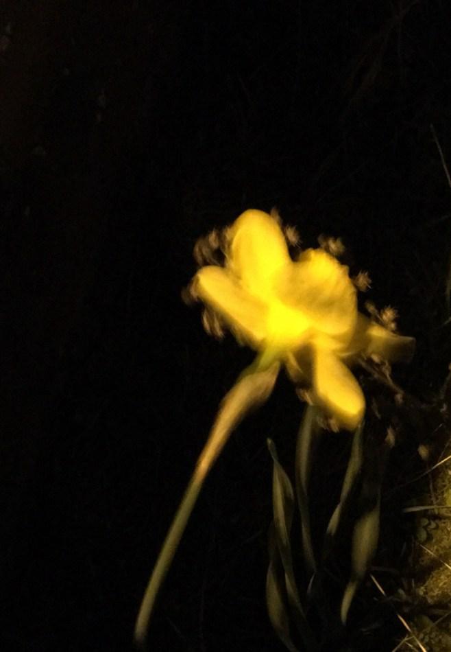 flower shake