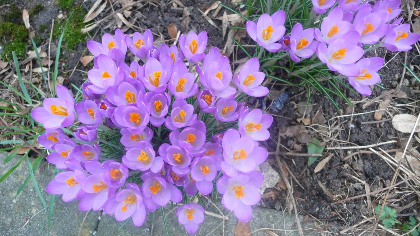 Blumenreserve