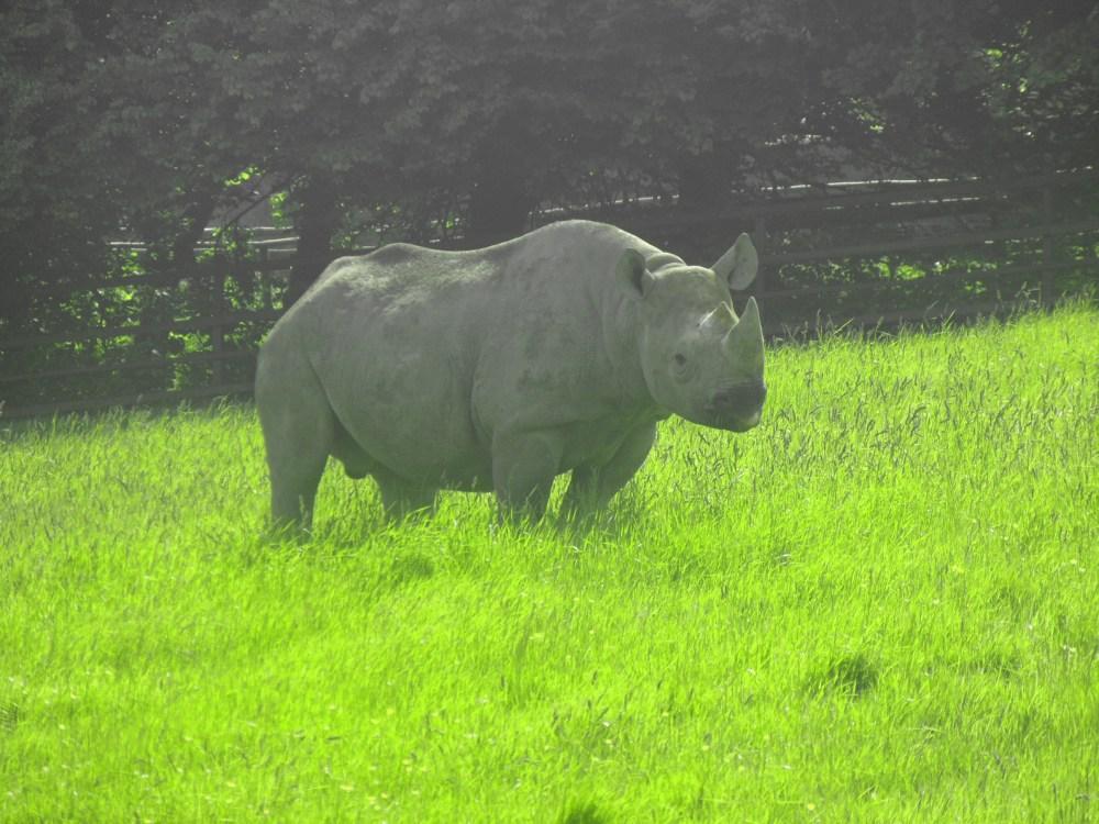 Port Lympne - Wild Animal park (4/5)