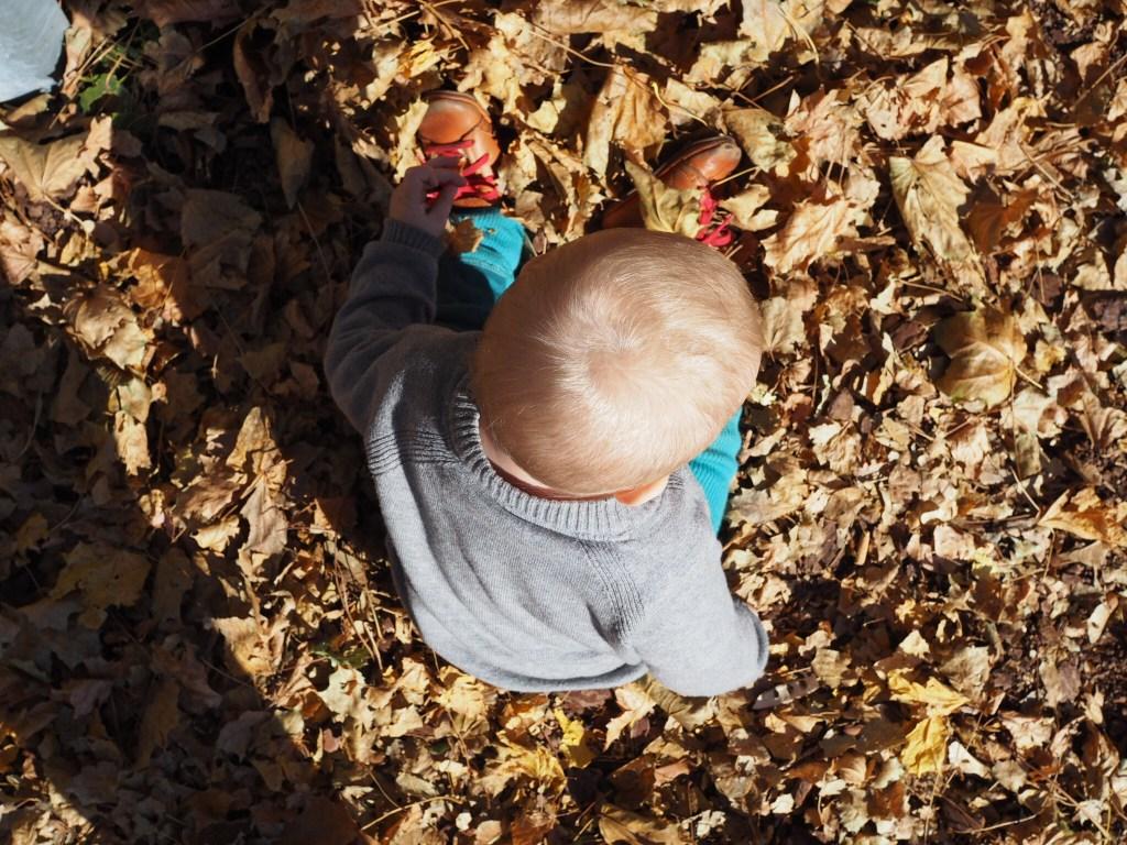 Baby Laub herbst