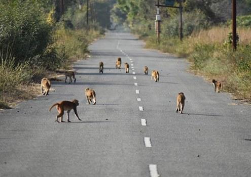 photo of monkeys crossing