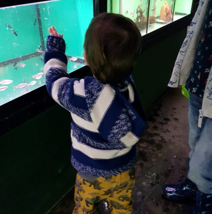 toddler-looking-into-fish-tank-in-shop