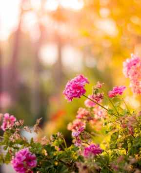 Nature's therapy: health benefits of tending to your garden