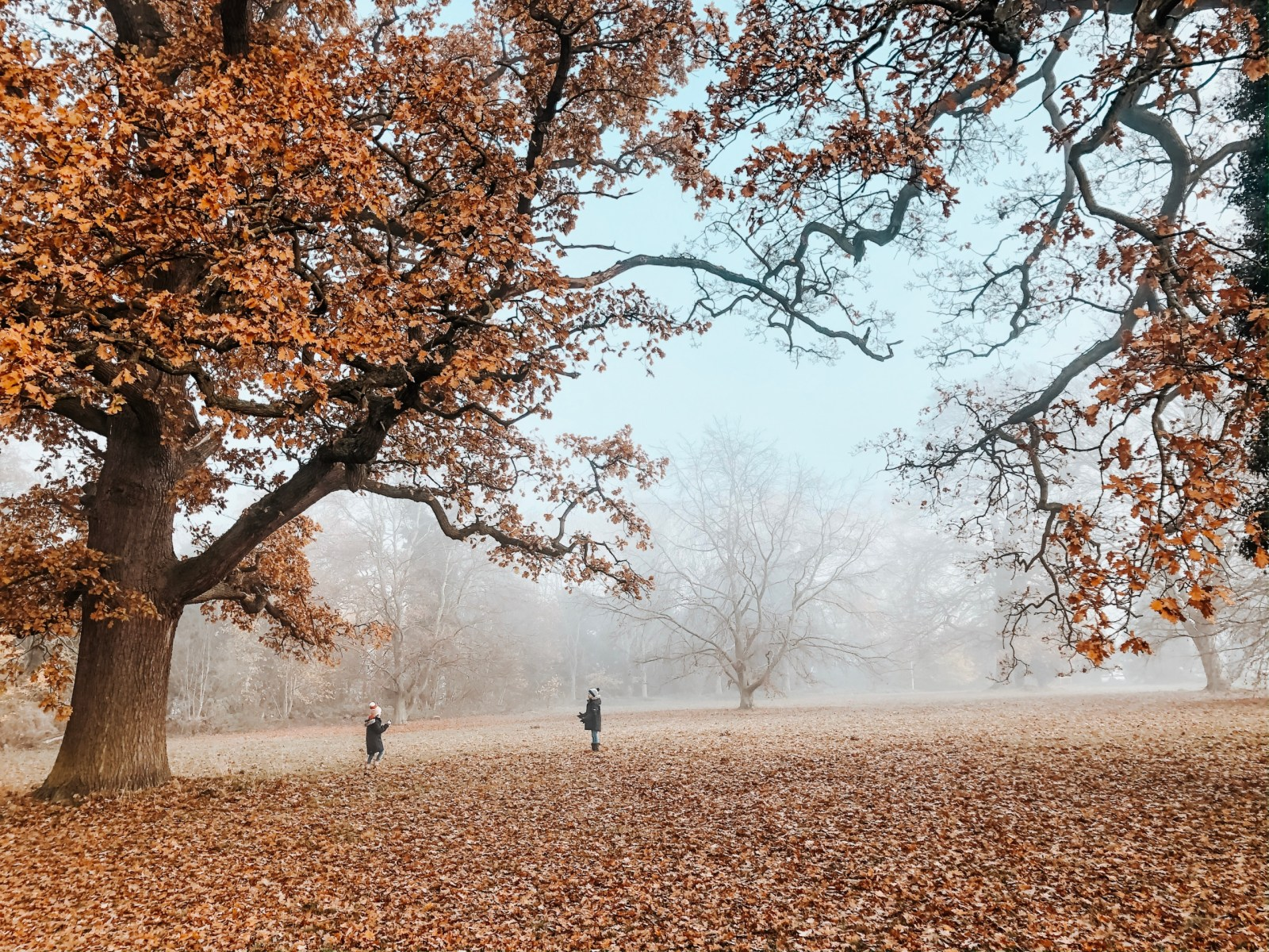 Misty Autumn Walk