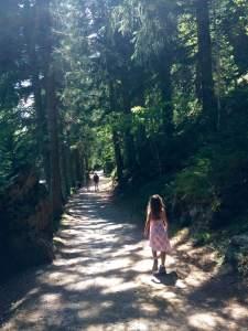 Gentle Shaded Walk