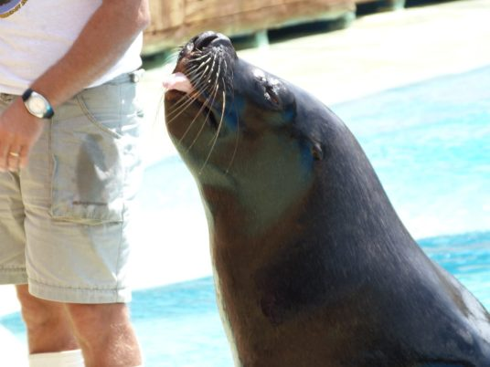 Rude little Sea Lion!