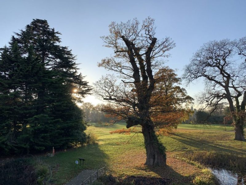 Our week in one picture- Woburn Abbey