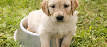 5 Things To Consider When Choosing The Best Dog Food For Your Dog