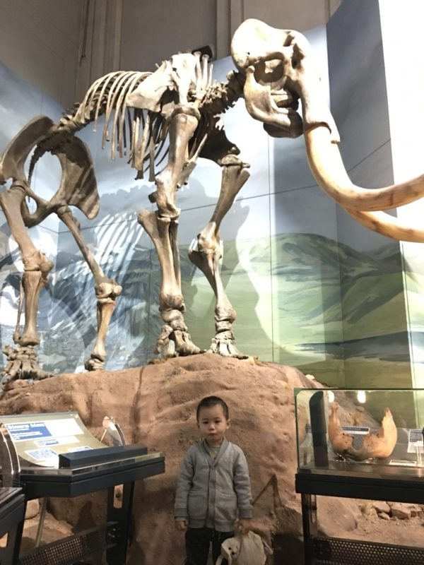 Ice Age's Manny at National Museum Cardiff