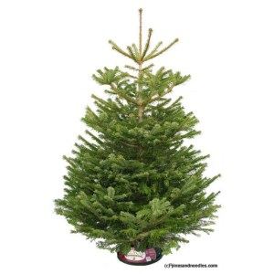 Christmas tree, Christmas, Pines and Needles, Review