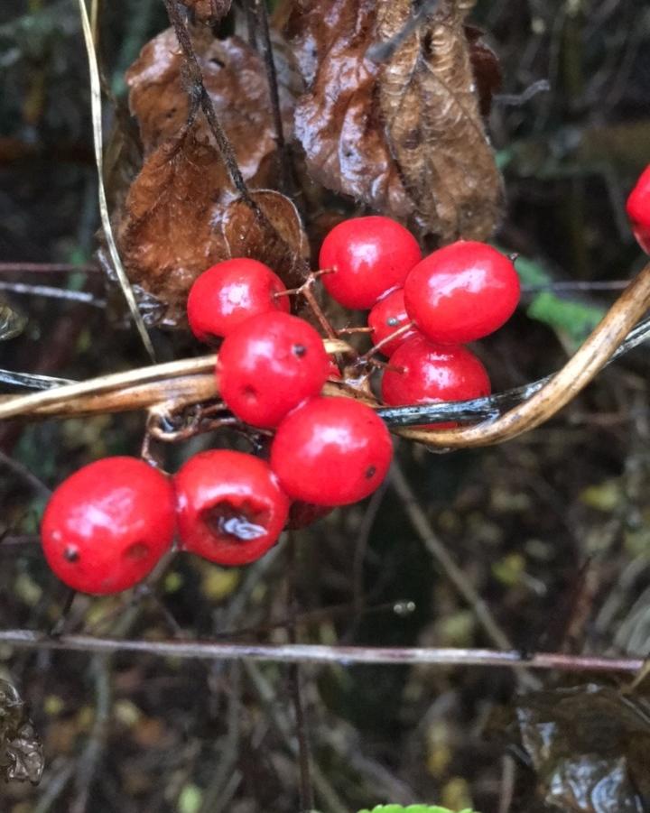 Berries, Autumn, 365