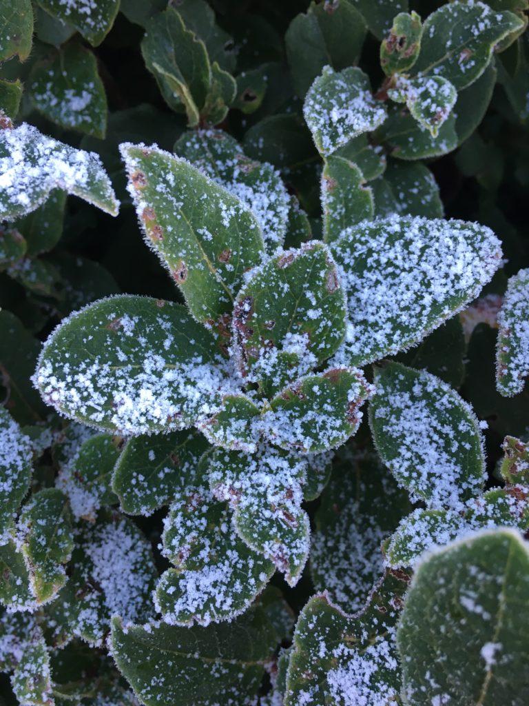 Snow, Leaves, Garden, 365