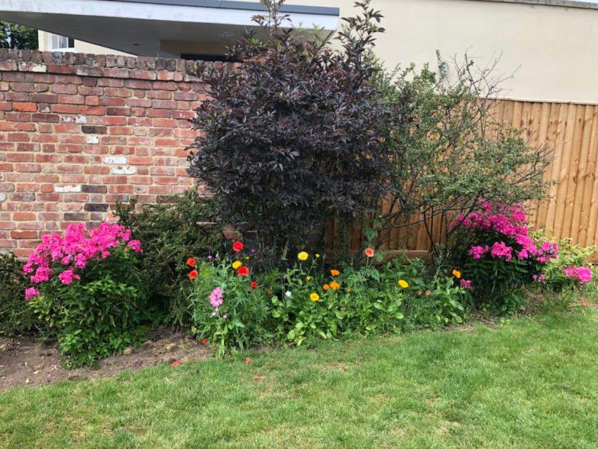 Flowers, Garden, Summer, 365, Learning to love the garden