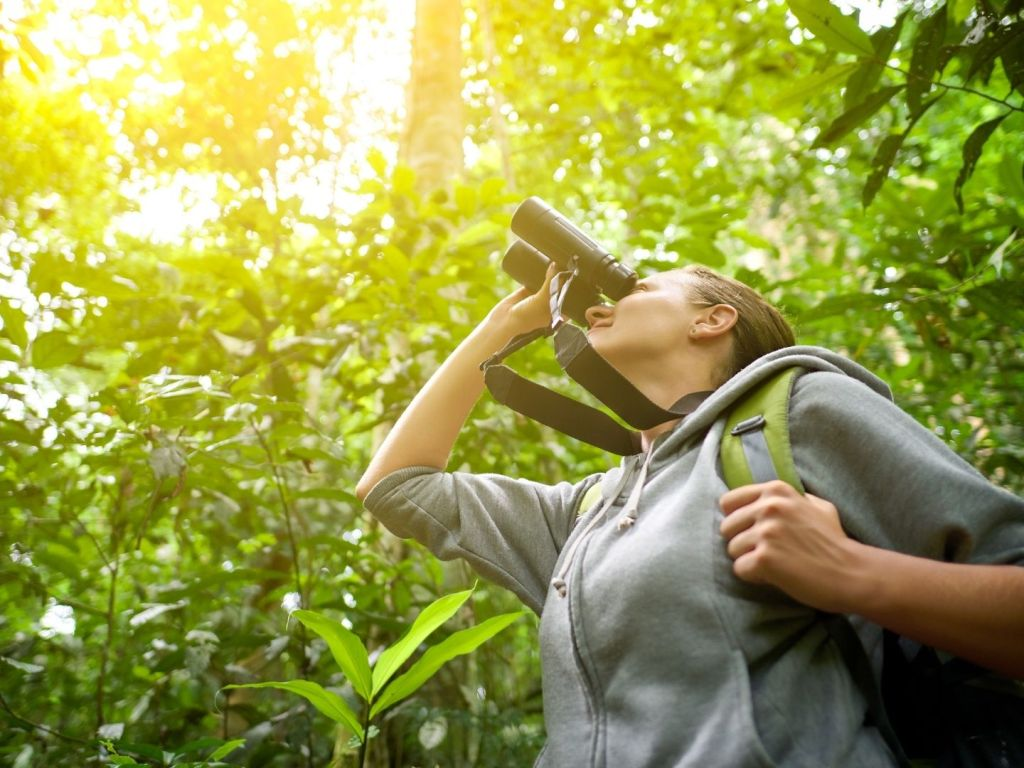 Why Bird Watching is More Popular Than Ever